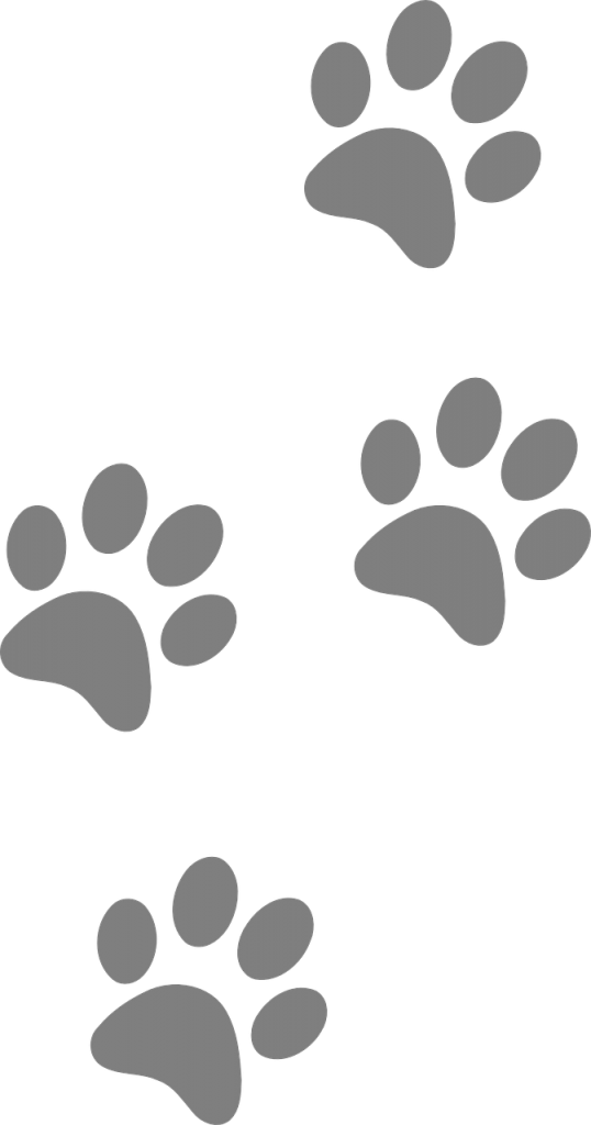 footprints, animal, dog